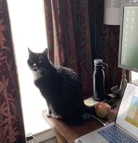 desk_nina_cat